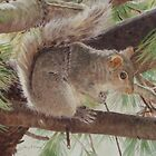Squirrel on Pine Tree by jmgreenartworks