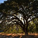 Lone Oak by LadyEloise