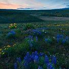 Cowiche Wildflower Sunset by DawsonImages