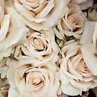 Beige roses by Yulianna-ca