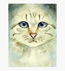 Blue-eyed Cat Photographic Print