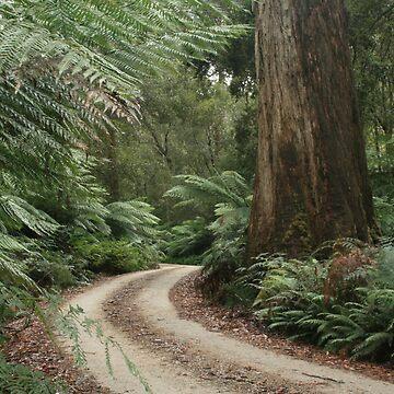 Spoin Kop road, far nor west Tasmania , Australia by phillip24