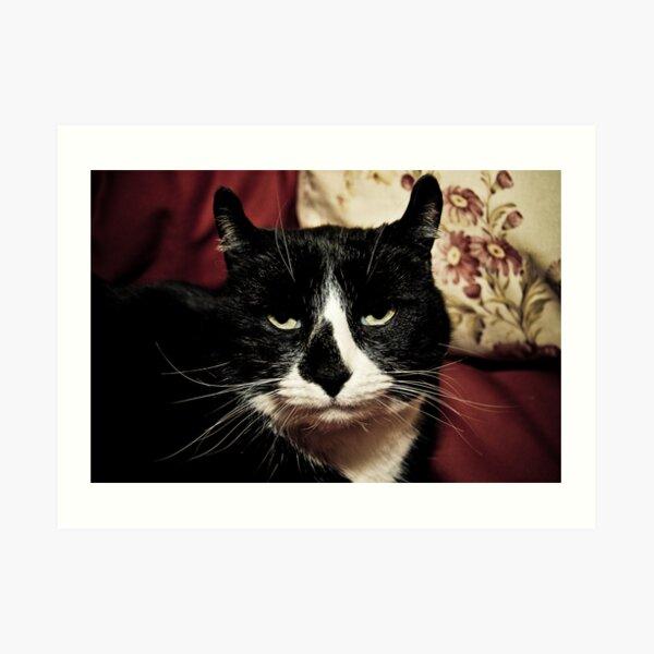 Curly-Eared Cat Art Print