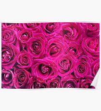 Elegant Floral Roses Poster
