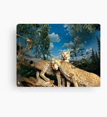 Natural environment diorama - two leopards  Canvas Print
