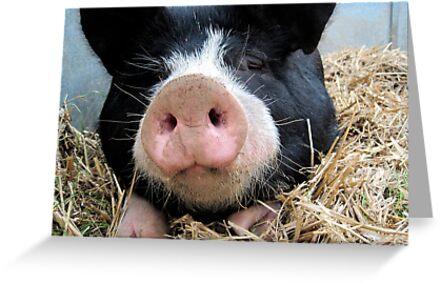 Pig by HappySheep