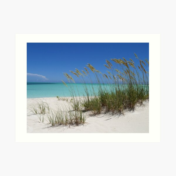Sea Grass at Treasure Cay  Art Print
