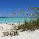 Sea Grass at Treasure Cay  by Amanda Diedrick