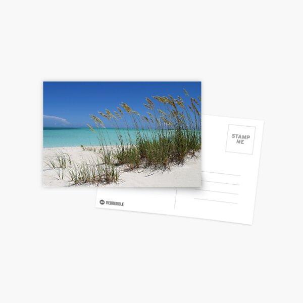 Sea Grass at Treasure Cay  Postcard