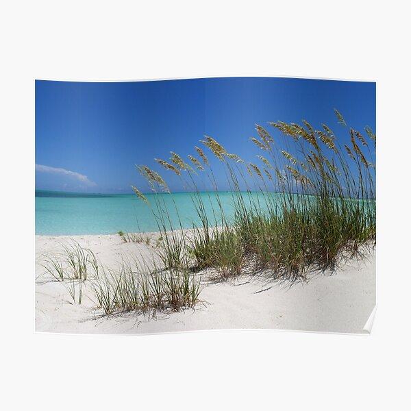 Sea Grass at Treasure Cay  Poster