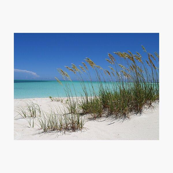 Sea Grass at Treasure Cay  Photographic Print