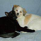 Oscar and Sally Sleeping by Andrew Trevor-Jones