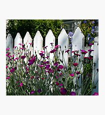 Old Fashioned Picket Fence Photographic Print