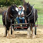Two Clydesdales at Churchill Island - 2015 by Bev Pascoe
