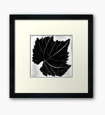 Grape leaf Framed Print