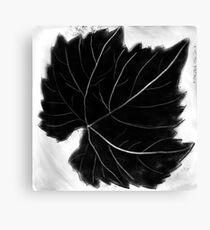 Grape leaf Canvas Print