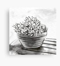 Potted succulent  Canvas Print
