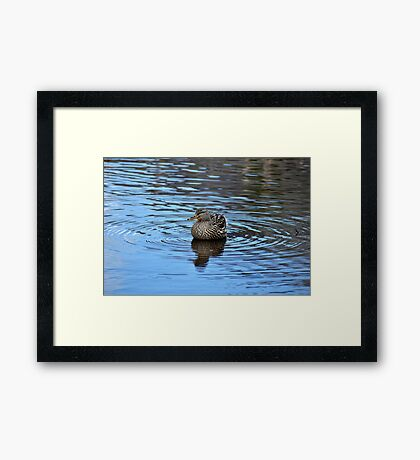 Swimming In Circles Framed Print
