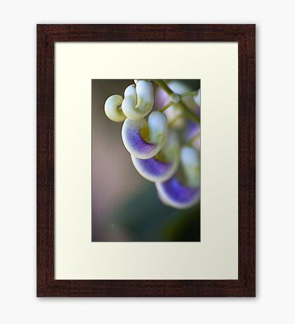 The Corkscrew Flower Framed Print