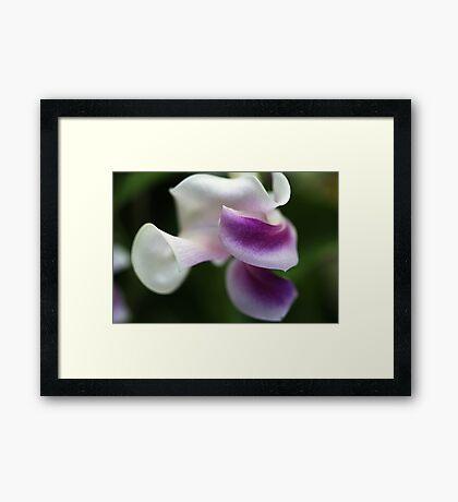 The Unusual Corkscrew Flower   Framed Print