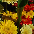 Gerberas in colour by Judi Corrigan