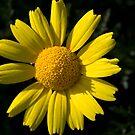 Yellow by Christian  Zammit