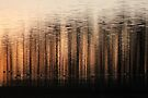 Another World by Jo Nijenhuis