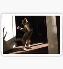Dancing cat Sticker