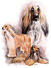 Afghan Hound by BarbBarcikKeith