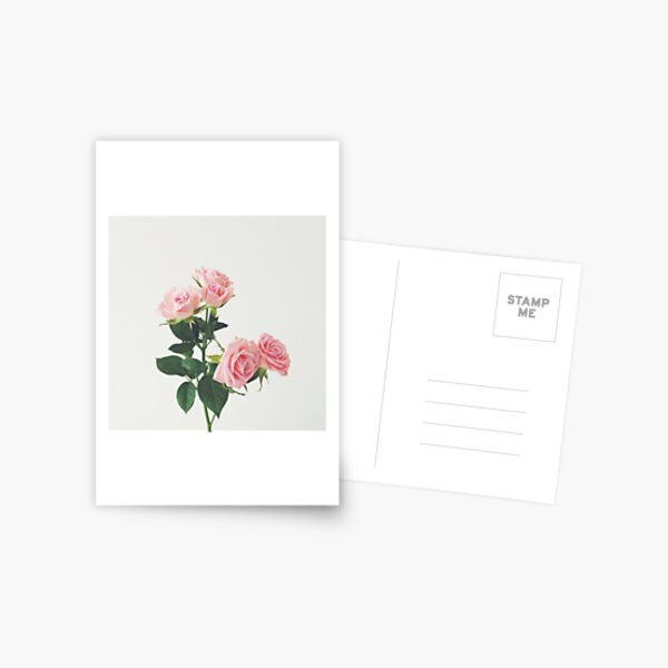 Spring Roses Postcard