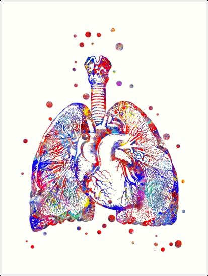 Láminas artísticas «Corazón y pulmones, arte del corazón, arte de la ...