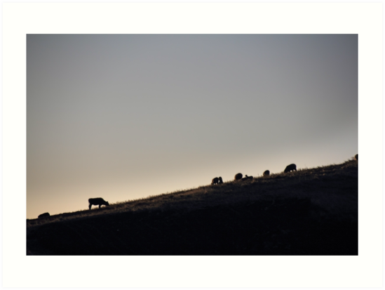 Cows and sheep grazing eating grass on hill side silhouette at sunset, Ecuador by Kendall Anderson