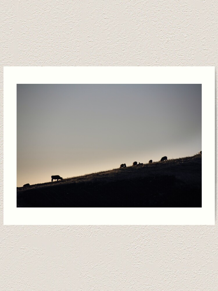 Alternate view of Cows and sheep grazing eating grass on hill side silhouette at sunset, Ecuador Art Print