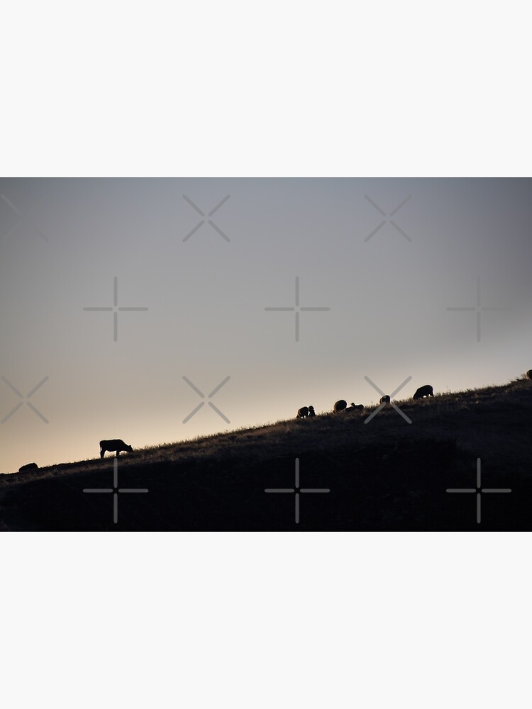 Cows and sheep grazing eating grass on hill side silhouette at sunset, Ecuador by kpander