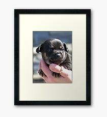 """Dexter"" Framed Print"