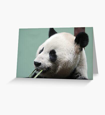 Pandamonium Greeting Card
