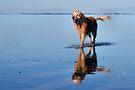 Captains Dog by Jo Nijenhuis