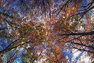 Autumn Tree Canopy by Nigel Bangert