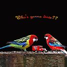 """""""Who's gunna drive?"""" - Rosella Parrots by Bev Pascoe"""