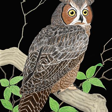 Great Horned Owl by Skyviper
