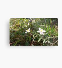 First Flower of Spring Metal Print