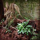 Woodland Fern by WessexBlades