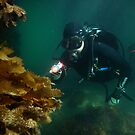 Diver investigating pier life by Andrew Newton