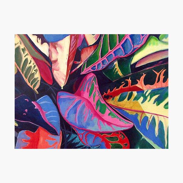 Rainbow Plant Photographic Print