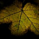 Golden Leaf  by MIchelle Thompson
