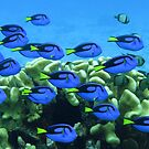 Blue Tang by Reef Ecoimages