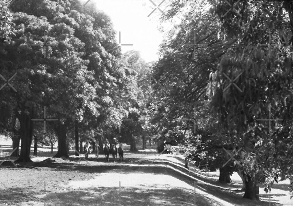 Centennial Park, NSW, Australia by C J Lewis