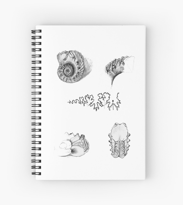 Ammonite Line Drawing