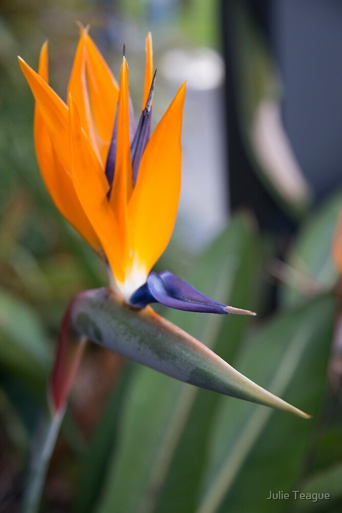 Bird of Paradise by jooles1707