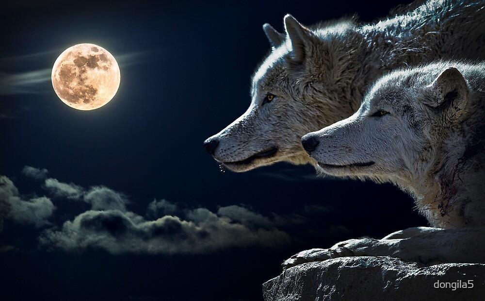 wolf by dongila5